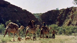 Camels and the Pitjantjara